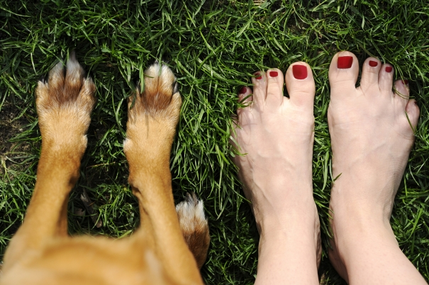 dog paws and woman's feet
